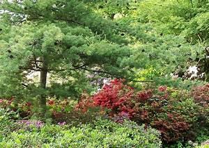 Hortensien Kombinieren Mit Anderen Pflanzen : rhododendron freiland azaleen pflanzen pflegen d ngen ~ Eleganceandgraceweddings.com Haus und Dekorationen