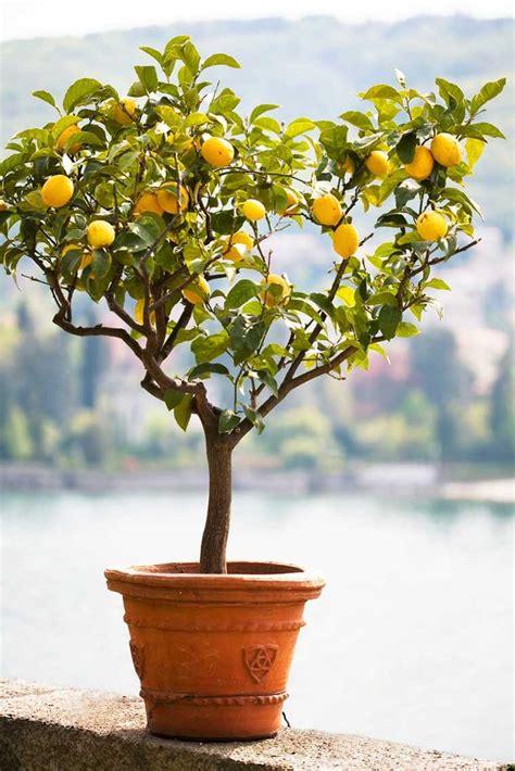 arbre en pot exterieur am 233 nagement jardin ext 233 rieur m 233 diterran 233 en quelles plantes choisir