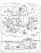 Coloring Prairie Dog Marmotte Murmeltier Coloriage Animals Marmotta Underground Sheet Ausmalbild Colorare Dam Dessin Malvorlage Disegni Colorier Enseignement Hoover Burrow sketch template