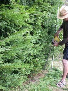Quand Tailler Les Arbustes De Haies : haie quand et comment tailler les conif res ~ Dode.kayakingforconservation.com Idées de Décoration