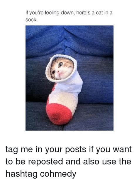 Feeling Down Meme - if you re feeling down here s a cat in a sock tag me in your posts if you want to be reposted
