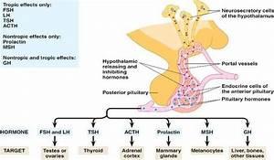 Prairiemary  Tropic Hormone Loops