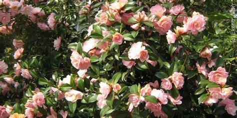 un 233 lia 224 planter au printemps sons pots and