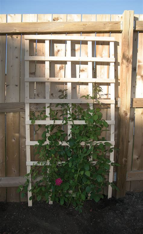 Large Trellis by Diy Trellises For Your Garden For Less Than 20