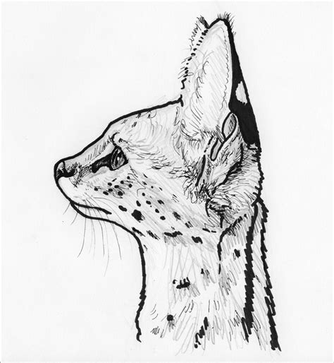 Cat Profile Drawing