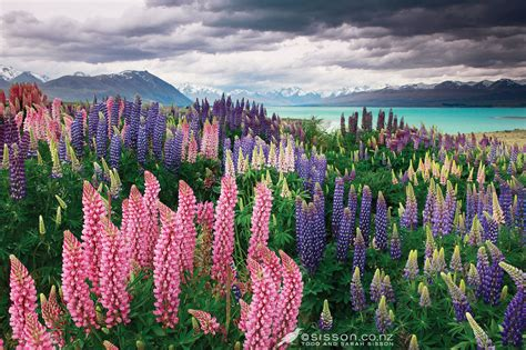 Lake Tekapo The Photo Autocracy