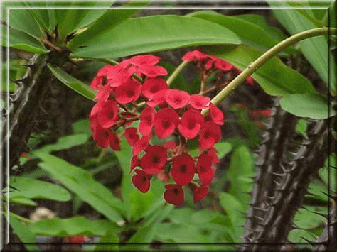 Tropical Rainforest Tropical Rainforest Common Plants