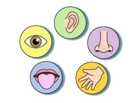vocabulary unit   senses