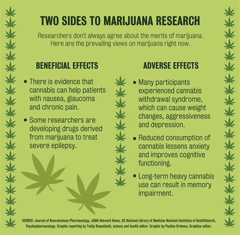 researchers unsure  effects  heavy cannabis