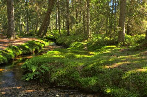 Bernau Im Schwarzwald Wiesen, Wälder, Weiden Natur