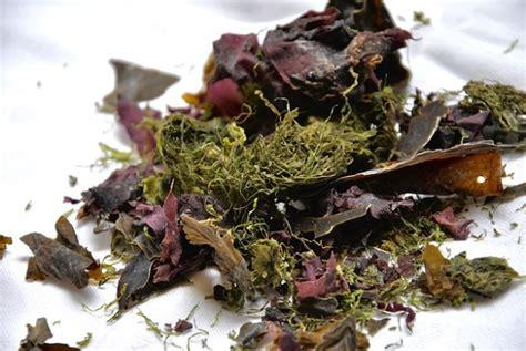 cuisiner des algues recette bio du caviar d 39 algues à l 39 apéritif