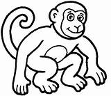 Monkey Coloring Pages Animal Monkeys Colouring Cartoon Sheets Colour Sheet Animals Printable Clip Templates Outline Drawing Zoo Face Template Simple sketch template