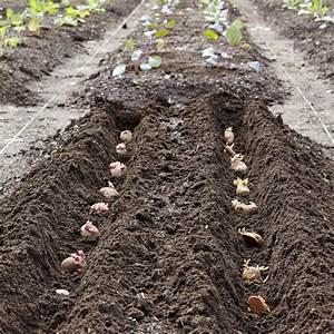 Période Pour Planter Les Pommes De Terre : comment planter pommes de terre conseils et astuces de ~ Melissatoandfro.com Idées de Décoration