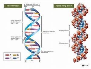 6 5 Nucleic Acids
