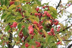 Arbre A Fruit : images gratuites arbre branche fleur fruit baie feuille m r aliments vert rouge ~ Melissatoandfro.com Idées de Décoration