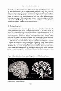 Reference Guide On Neuroscience