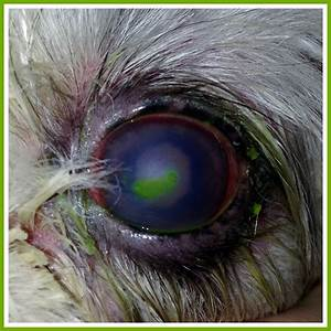 Wordless Wednesday  What U2019s Your Diagnosis  7