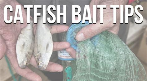 Backyard Trolines by Catfish Bait And Tackle Tips The Ultimate List Of