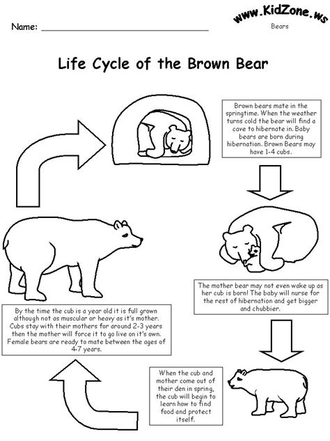 Life Cycles, Brown Bears And Bears On Pinterest