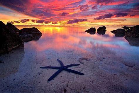 Starfish South Island New Zealand Travel Photos