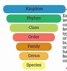 scunderwood - Classification