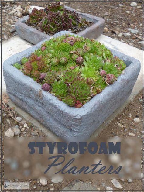 styrofoam planters insulated  long lasting surprisingly