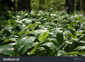 A Detail Photo Of Undergrowth Plants In The Forest