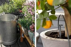 Pflanzen Im Urlaub Bewässern : tipps und tricks f r die gartenbew sserung do it garden blog ~ Markanthonyermac.com Haus und Dekorationen