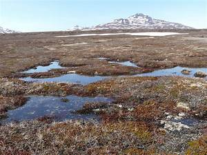 Ramsar Focuses On Arctic Wetlands
