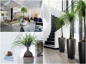 Arbuste D Intérieur : bien choisir sa plante d 39 int rieur palmiers arbuste et ~ Premium-room.com Idées de Décoration