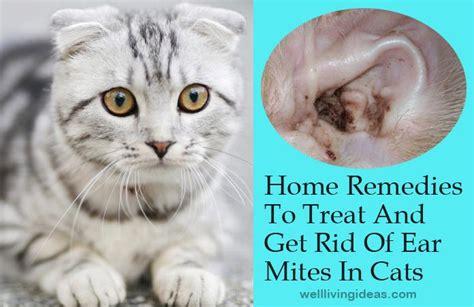 effective home remedies  treat   rid  ear