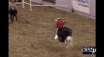 Cowboy Monkey Dog Riding Horse Rodeo Gifs