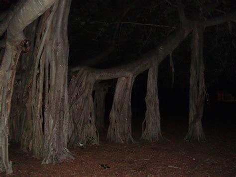 KĀJĀM GAISĀ: Dzīvojamais koks