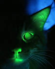 glow in the cat meet mr green genes the world s glow in the