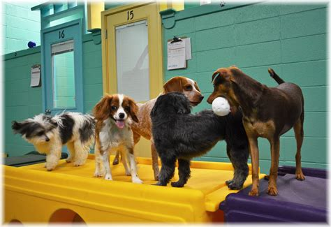 Paradise Pet Resort And Spa Offers Boarding Grooming In Huntsville Al Northern Alabama
