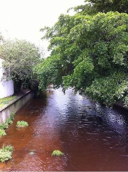 River Liesbeek Rosebank Wikipedia Communitree Wiki