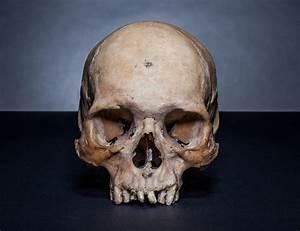 Skull Reference