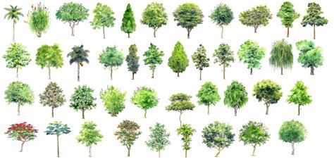 Hand-painted PSD Tree Blocks 3