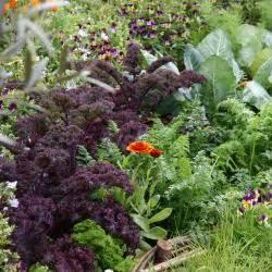 Ameisen Im Gemüsebeet : blumenkohl pflanzen pflegen und ernten mein sch ner garten ~ Whattoseeinmadrid.com Haus und Dekorationen