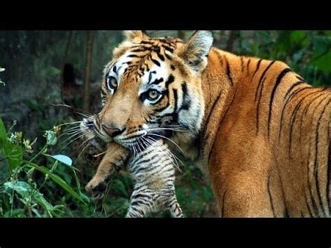 wildlife documentary wild thailand  land  beauty