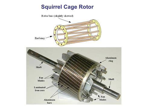 rotor bars   induction motor skewed impremedianet