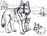 Coloring Pages Wolf Wolves Popular sketch template