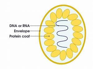 File Simple Diagram Of Virus  En  Svg