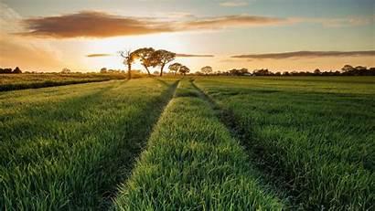 Field Nature Grass Path Landscape Wallpapers Rural