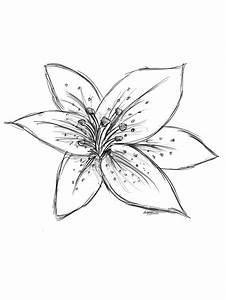 Tiger Lily Drawing | Lilies drawing, Flower drawing, Lilly ...