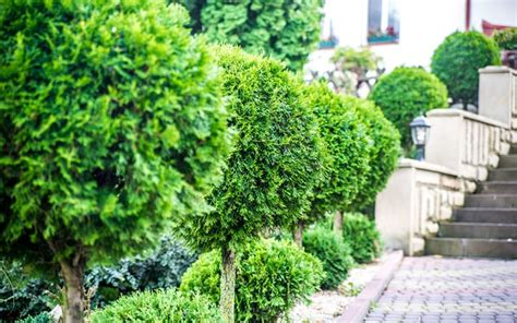 How To Create Winter Garden Structure With Evergreen Plants