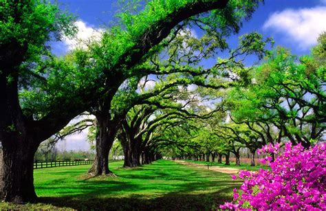 fondo pantalla paisaje jardin diseno jardines