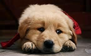 Sad Puppy Pictures - E...Sad Puppy