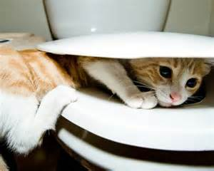 how to cat to use toilet cats can use the toilet and flush 10 fascinating facts