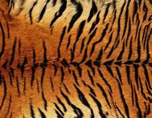 Tiger Skin Background | Gallery Yopriceville - High ...